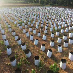 LDPE Poly Grow Bags For Plants (20 POLY GROW BAGS- 24*24*50 Cms)- SIZE 3