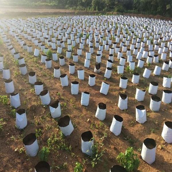 LDPE Poly Grow Bags For Plants (10 POLY GROW BAGS- 24*24*50 Cms)- SIZE 3