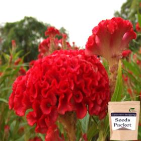 Cockscomb Red Seeds (Hybrid)- Buy Cockscomb Red Seeds Online India - Gardenershopping