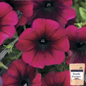 Petunia Burgundy Seeds (Hybrid)