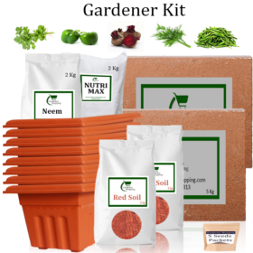 Plastic Pots Gardener Kit Value Added- Coriander, Capsicum Green, Beetroot, Dill, Green Chilli Small (Buy Complete Grow kit/ Growing kit Online India) - Gardenershopping