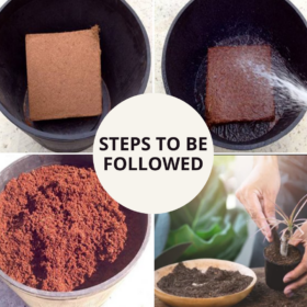 Coco Peat Block (Set Of Two 650grm Blocks)-Expands To 16 Liters Of Coco Peat Powder